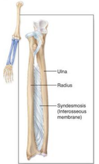 an example of an interosseus fibrous joint is