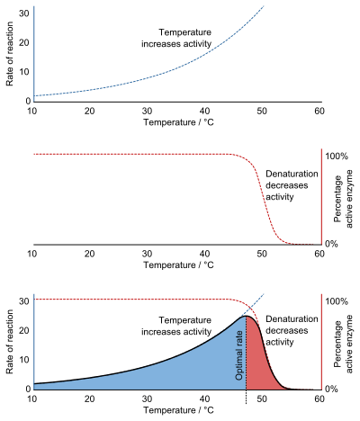 an example of denaturation is