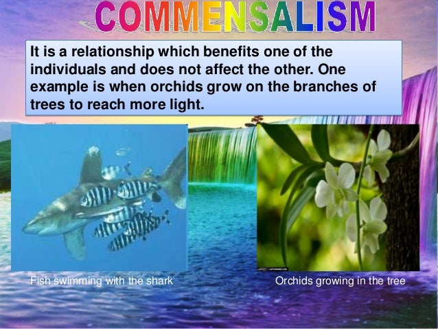 a good example of commensalism would be the relationship between